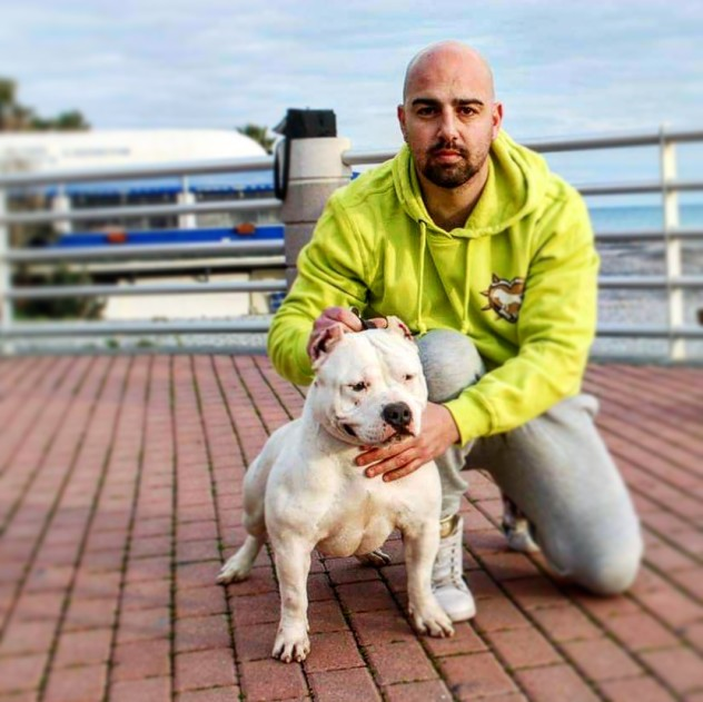 Diva - American Bully Pocket femmina