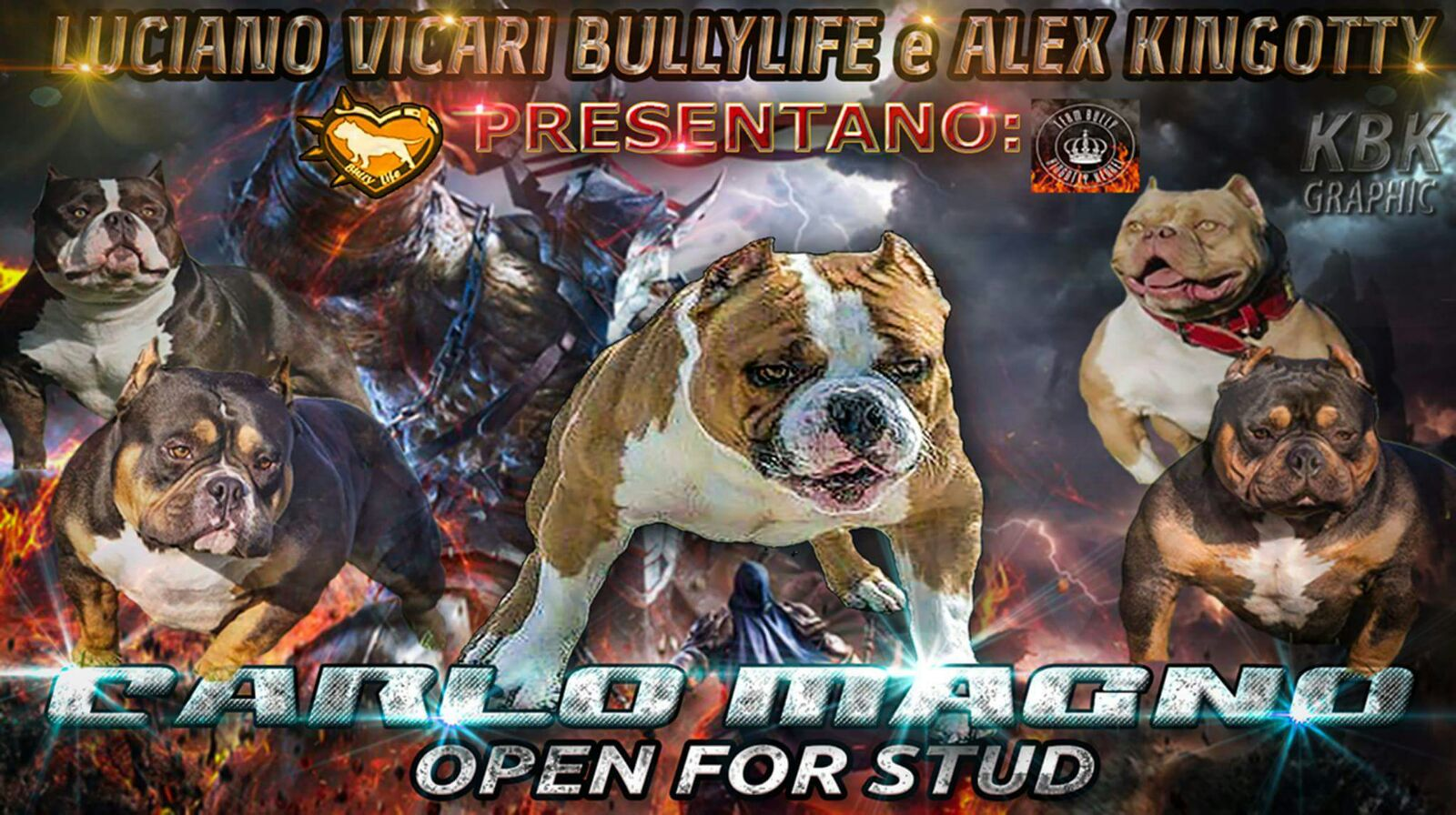 Carlo Magno american bully open for stud